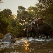 Last of the Elephant Men