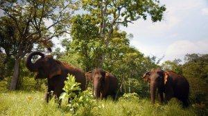 The wedding of the elephants