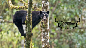 The secret life of the Andean Bear